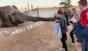 Une touriste frappée au visage par un éléphant alors qu'elle tente de prendre une photo