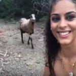 Une chèvre n'aime pas les Selfie