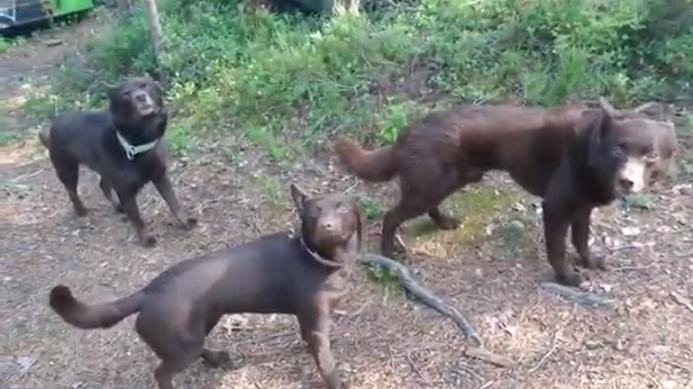 Ces Trois chiens ne bougent pas !