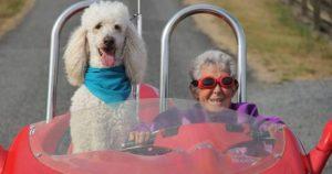 Une femme de 90 ans refuse la chimio et part à l'aventure avec son Caniche