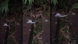 Escargot traverse malgré le vide entre deux bouts de bois