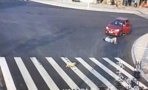 Un chiot traverse une route avec prudence mieux qu'un piéton