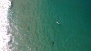 Un drone sauve un surfeur d'un requin à l'aide de haut-parleurs (Australie)