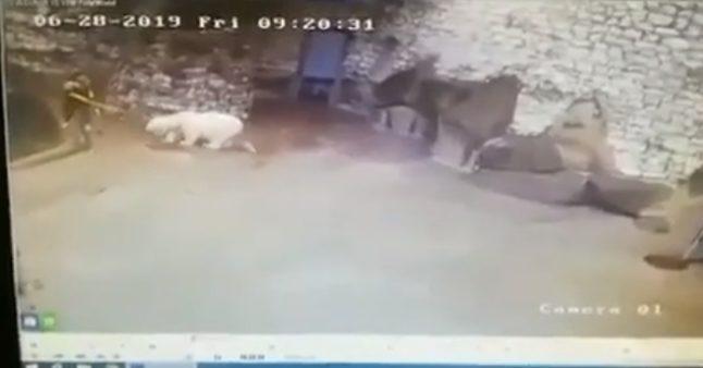Cette employée d'un zoo en train de nettoyer un enclos surprise par un ours polaire