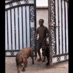Ce jeune homme rentre d'une promenade mouvementée avec ses chiens