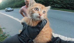 Ce motard sauve un chaton abandonné au milieu d'une route