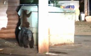La police aide un ourson coincé dans une poubelle à se réunir avec sa famille