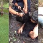 Ils tentent d'attraper un ours qui a la tête coincée dans un pot en plastique