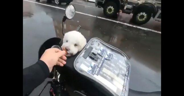 Ce sac permet d'emmener son chien à moto