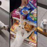 Un chat attend qu'une cliente le fasse entrer dans un magasin pour lui acheter des friandises