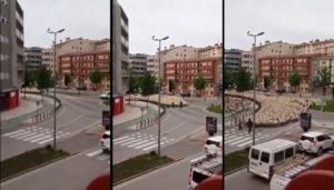 Un troupeau de moutons traverse le centre-ville en quelques secondes