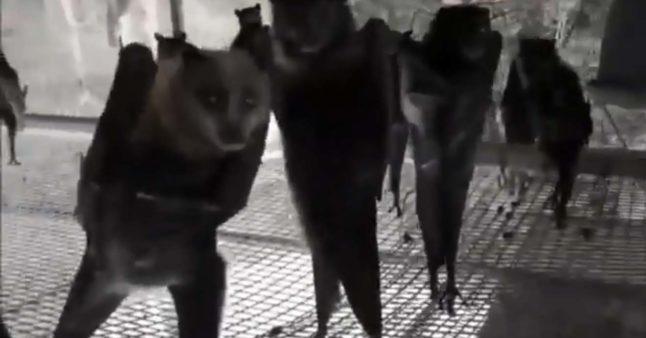 Chauves-souris qui dansent dans une discothèque
