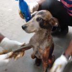 Ils sauvent un chien couvert de goudron et de débris