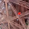 Ce Russe escalade la Tour Eiffel sans filet de sécurité, sensations extrêmes