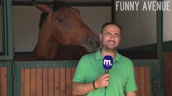 Ce reporter rate son direct à cause d'un cheval