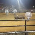 Ce taureau fait voler des hommes dans des ballons - Jeu dangereux!