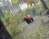 Course poursuite entre un ours et un cycliste et peur de sa vie!