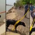 Un Indien sauve un chien de la noyade en déroulant son turban !
