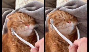 Ce chat aime se faire caresser avec ce jouet