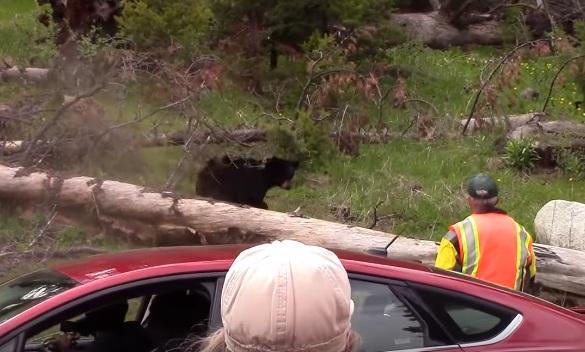 Un garde forestier utilise la bombe au poivre contre une mère et ses oursons