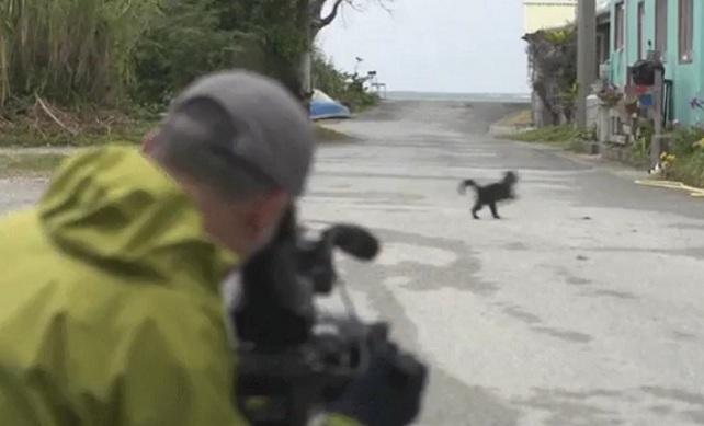Ce chat attaque un cameraman en train de le filmer