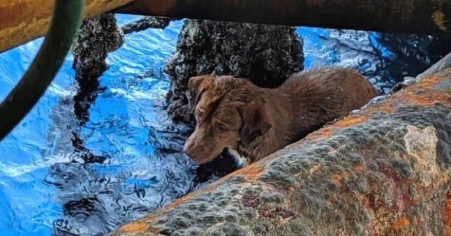 Chien sauvé à 220 kilomètres du rivage par des ouvriers d'une plate-forme pétrolière