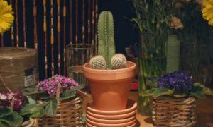 Faites-vous pardonner avec un bouquet de cactus