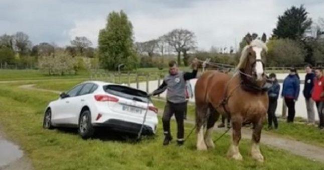 Ce cheval de trait joue le rôle d'une dépanneuse