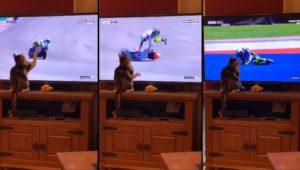 Il chute de sa moto à cause d'un chat qui le regarde à la télévision