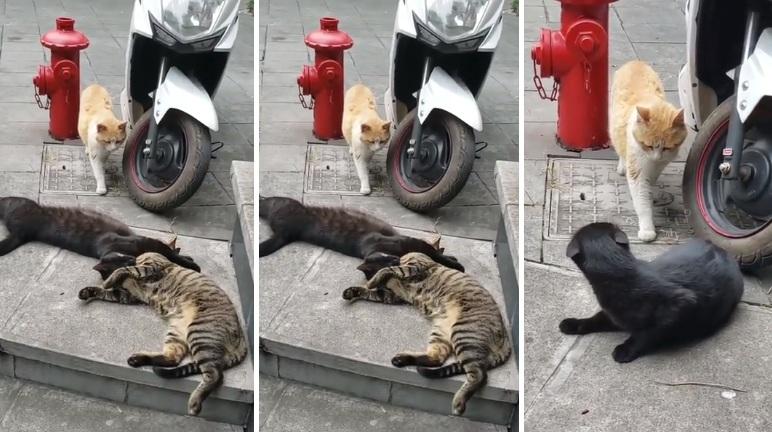 Une chatte surprend son mec avec sa maîtresse