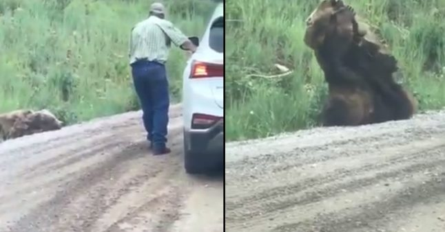 Un ours malade effraie les gens au bord d'une route