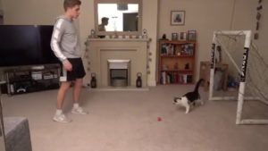 Ce chat est un meilleur gardien de but