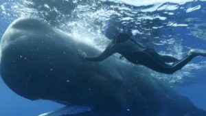 Un cachalot demande aux plongeurs de lui retirer un hameçon