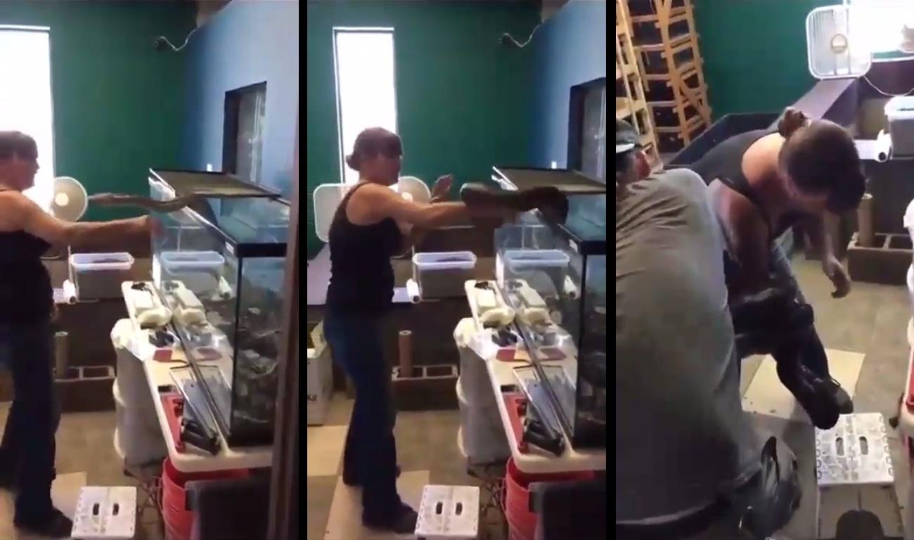 Un python domestique attaque une femme à la sortie de son terrarium
