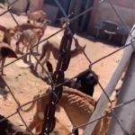 La garde civile sauve la vie de 41 chiens dans un état d'abandon grave
