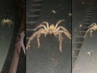 Une araignée et ses bébés ont élu domicile dans le tableau de bord d'une voiture